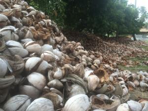 coconut husk pile
