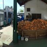 coconut loading area